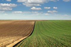 Grüner Weizen und gepflogene Weidelandschaftsfrühlings-saison agric Stockfotografie