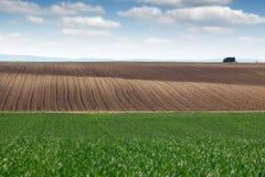Grüner Weizen und gepflogenes Feld Lizenzfreies Stockbild