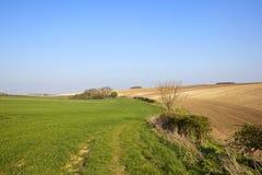 Grüner Weizen und kreideartiger Boden Stockbild