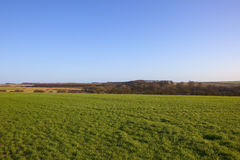 Grüner Weizen und Waldland Lizenzfreies Stockbild