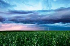 Grüner Weizen unter einem Sturmhimmel Stockfoto