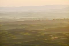 Grüner Weizenhügel vom palouse Lizenzfreies Stockbild