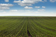 Grüner Weizenweidelandschaftsfrühling Lizenzfreies Stockbild