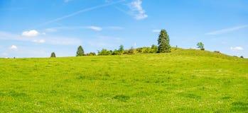 Grüner Wiesenhügel mit Bäumen und blauem Himmel stockfotografie