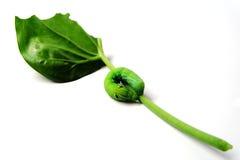 Grüner Wurm stockbilder