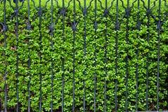 Grüner Zaun Lizenzfreies Stockbild