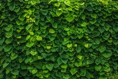 Grüner Zaun Lizenzfreie Stockfotos