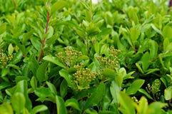 Grüner Zaun stockbild