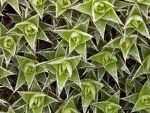 Grüner Zoom lizenzfreies stockbild