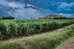 Grüner Zuckerrohr-Feld-Thailand-Gebirgshintergrund Stockbilder