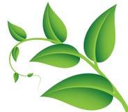 Grüner Zweig stock abbildung