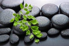Grüner Zweig Adiantumsfarn auf Zenbasaltsteinen mit Tau, beautifu Lizenzfreies Stockbild