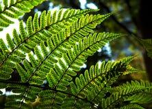 Grüner Zweig des Baums Stockfotos