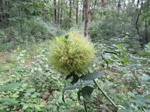 Grüner Zweig im Wald Lizenzfreies Stockfoto