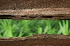Grünere Außenseite lizenzfreie stockfotos