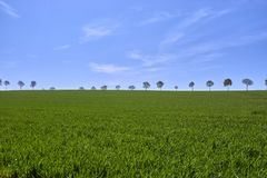 Grünes üppiges Ackerland in ländlichem Deutschland betont durch Baumreihe Lizenzfreies Stockbild