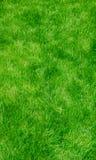 Grünes üppiges Gras - Vertikale Lizenzfreies Stockbild