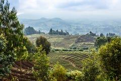 Grünes Ackerland fängt Landschaft im Nationalpark Virunga-Vulkans auf Stockfoto