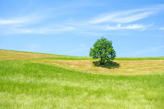 Grünes Ackerland mit Baum, blauer Himmel Stockfotos