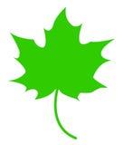 Grünes Ahornblatt Lizenzfreies Stockbild
