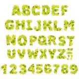 Grünes Alphabet Stockfoto