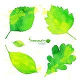 Grünes Aquarell des Sommers malte Laubsatz Stockfotografie