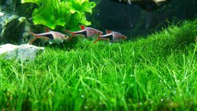 Grünes Aquarium Lizenzfreies Stockbild