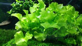 Grünes Aquarium Lizenzfreie Stockfotos