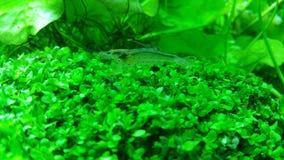 Grünes Aquarium Stockfotos