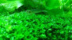 Grünes Aquarium Stockfotografie