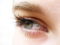 Grünes Auge Lizenzfreies Stockfoto