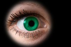 Grünes Auge der Frau Stockfotografie