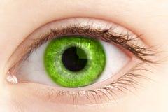Grünes Auge des Personenabschlusses oben Stockfotos