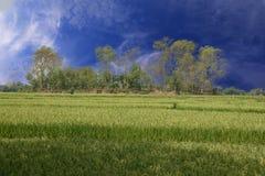 Grünes Bauernhoffeld Stockbilder