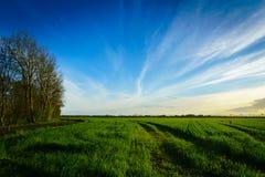 Grünes Bauernhoffeld im Frühjahr, genommen bei Sonnenuntergang Stockbilder