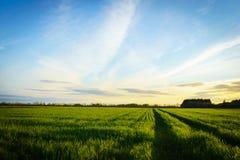 Grünes Bauernhoffeld im Frühjahr, genommen bei Sonnenuntergang Stockfoto