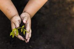 Grünes Baum-Pflanzenweltgrün rees mit Geld, Rettungsgeld und den wachsenden Händen stockfoto