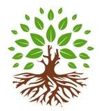 Grünes Baumzeichen Stockbilder