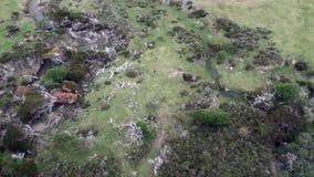 Grünes Bergpanorama auf Küstenlinienansicht vom Hubschrauber von Falkland Islands stock video