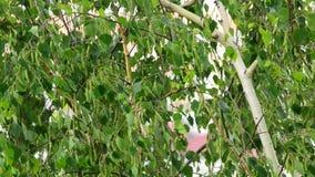 Grünes Birkenlaub im Regen stock video