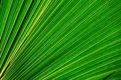 Grünes Blatt 3 Lizenzfreies Stockfoto