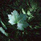 Grünes Blatt. lizenzfreie stockfotos