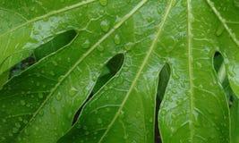 grünes Blatt Lizenzfreies Stockfoto