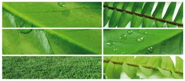 Grünes Blatt 6 Lizenzfreies Stockfoto
