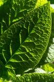 grünes Blatt Stockfotos