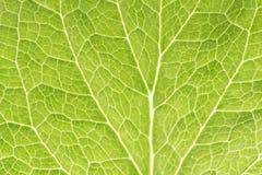 Grünes Blatt als Hintergrund Lizenzfreies Stockbild