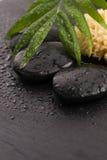 Grünes Blatt auf Badekurortstein auf schwarzer Oberfläche Stockfotografie