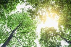 Grünes Blatt auf Baum lizenzfreies stockbild