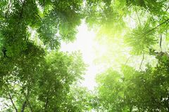 Grünes Blatt auf Baum lizenzfreie stockbilder