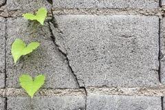 Grünes Blatt auf Betonblöcken lizenzfreies stockfoto